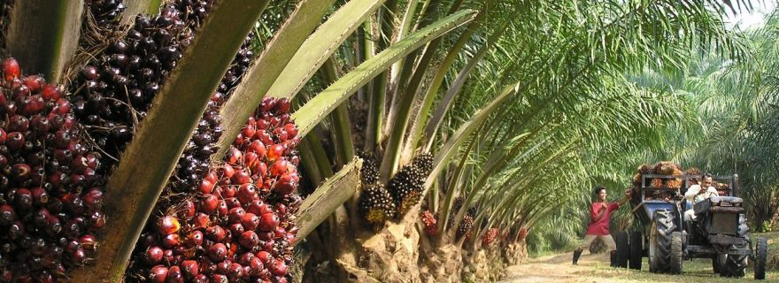 Teaching CSR: stakeholder scenario in palm oil industry reveals its value